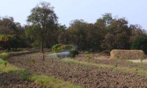 Разграничение государственной собственности на землю: порядок оформления