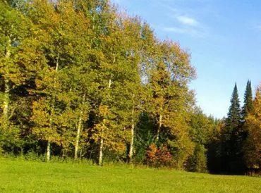 Земля: перевод земель в разные категории