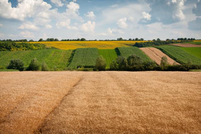 Сколько стоит аренда земли у государства — цена аренды участка
