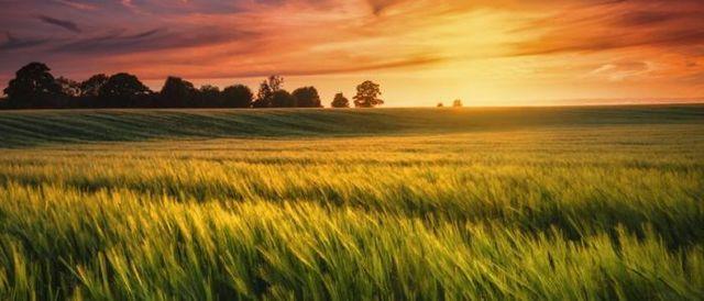 Земельный налог для физических лиц: ставка, срок уплаты