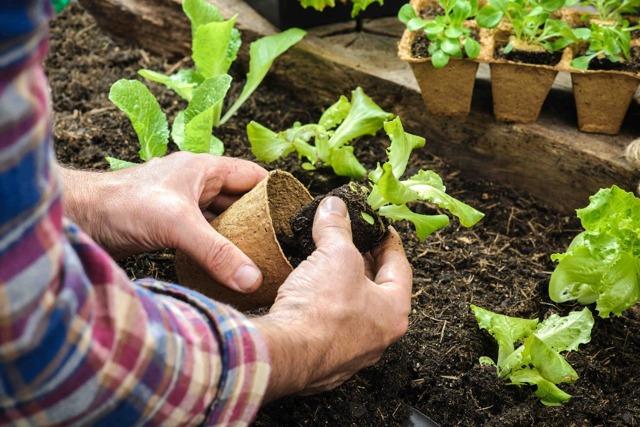 Документы для приватизации земельного участка в садоводстве