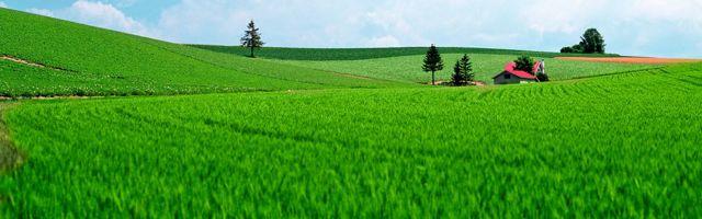 НК РФ — ЗЕМЕЛЬНЫЙ НАЛОГ | Глава 31 кодекса «о налоге на землю»